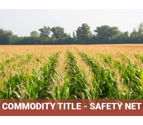 "Corn Field with title ""Commodity Title - Safety Net"""